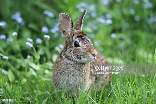 Close-Up Of Rabbit On Grass