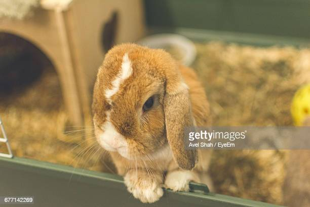 close-up of rabbit - animal welfare stock photos and pictures