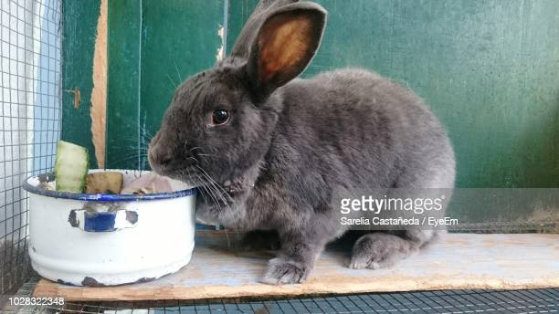 close-up of rabbit sitting by food in bowl on wood - domestic animals stock pictures, royalty-free photos & images