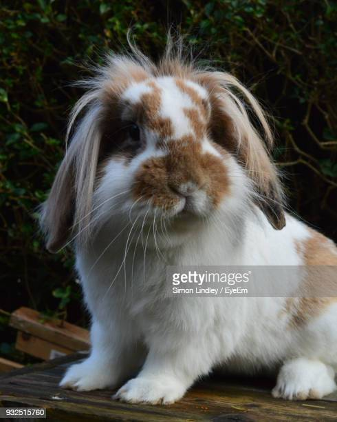 Close-Up Of Rabbit Sitting In Park