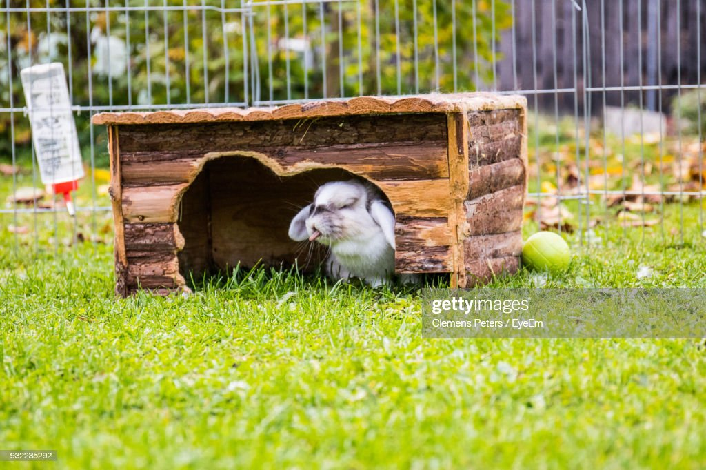 Close-Up Of Rabbit Under Wood On Grassy Field : Stock Photo
