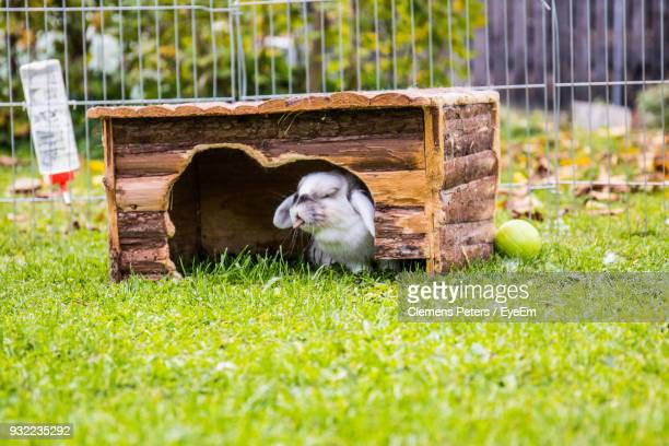close-up of rabbit under wood on grassy field - under tongue stock pictures, royalty-free photos & images