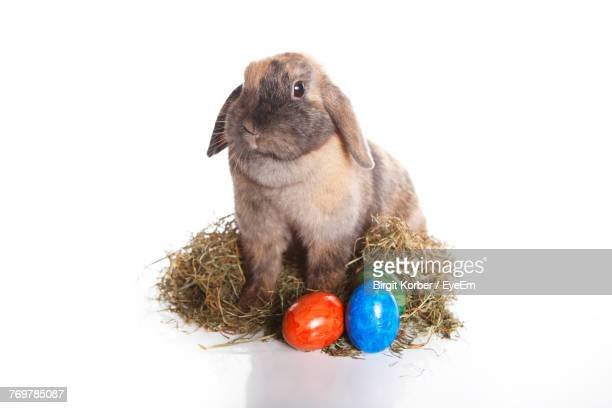 Close-Up Of Rabbit With Easter Eggs On White Background