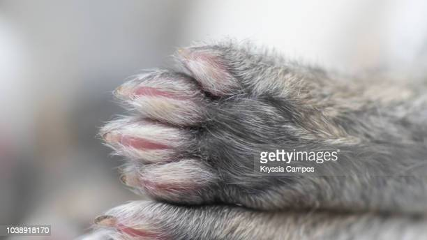 close-up of rabbit`s hind legs of bunny - animal finger stock photos and pictures