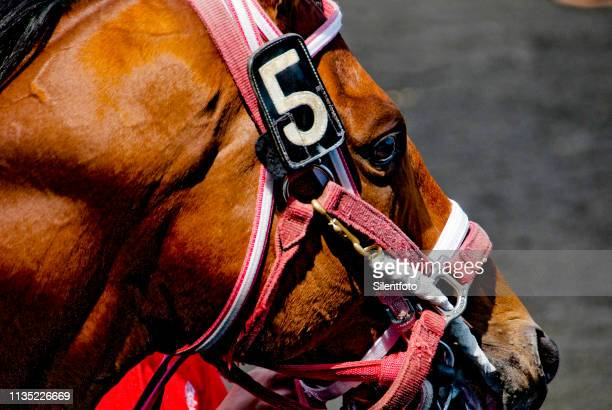 close-up of race horse head in bridle - racehorse stock pictures, royalty-free photos & images