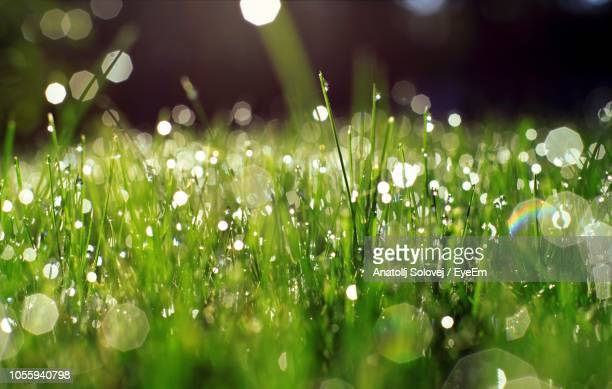 close-up of raindrops on grass - zuiverheid stockfoto's en -beelden