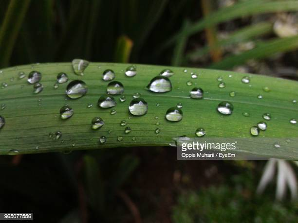 close-up of raindrops on grass - oppie muharti stock pictures, royalty-free photos & images