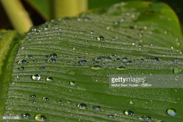 Close-Up Of Raindrops On Green Leaf