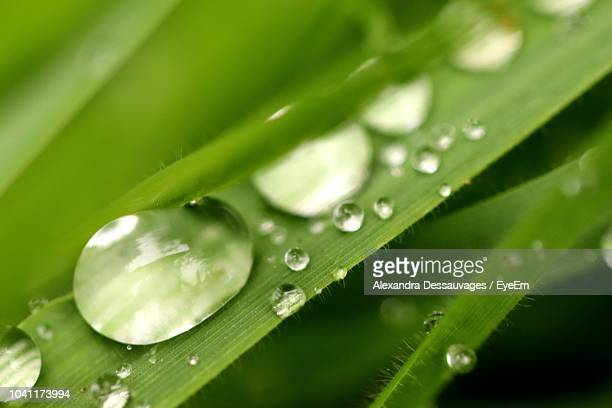 Close-Up Of Raindrops On Green Leaves During Rainy Season