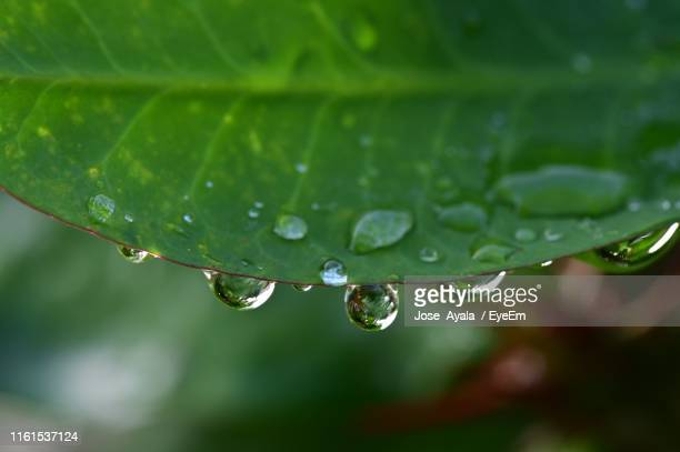 close-up of raindrops on green leaves - jose ayala stock pictures, royalty-free photos & images