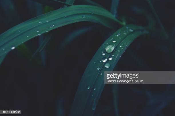 close-up of raindrops on leaf - graspflanze stock-fotos und bilder