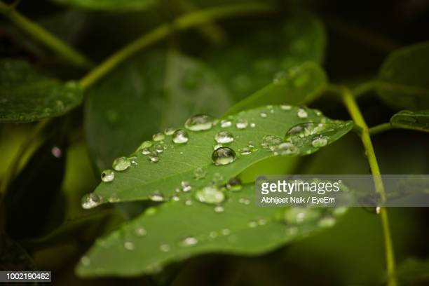 close-up of raindrops on leaves - rainy season stock pictures, royalty-free photos & images