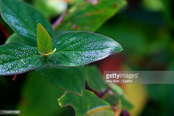 close-up of raindrops on leaves - amy shamrock stock pictures, royalty-free photos & images