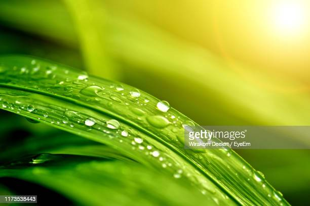 close-up of raindrops on leaves - dew stock pictures, royalty-free photos & images