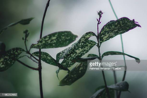 close-up of raindrops on plant - rahmad himawan stock photos and pictures