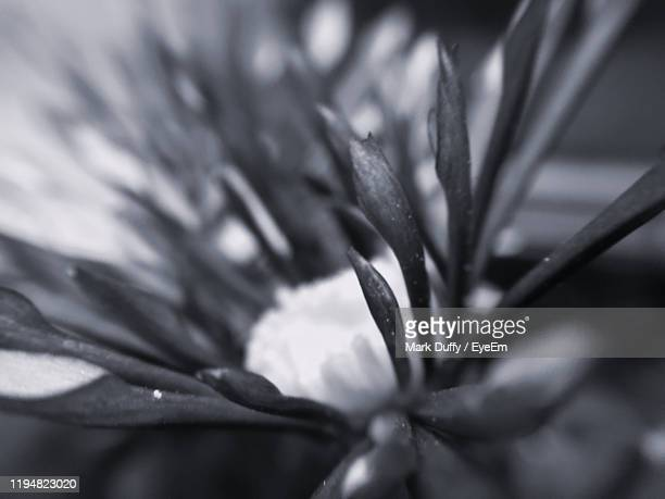 close-up of raindrops on plant - mark bloom stock pictures, royalty-free photos & images