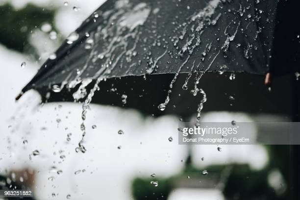 close-up of raindrops on plant - umbrella stock pictures, royalty-free photos & images