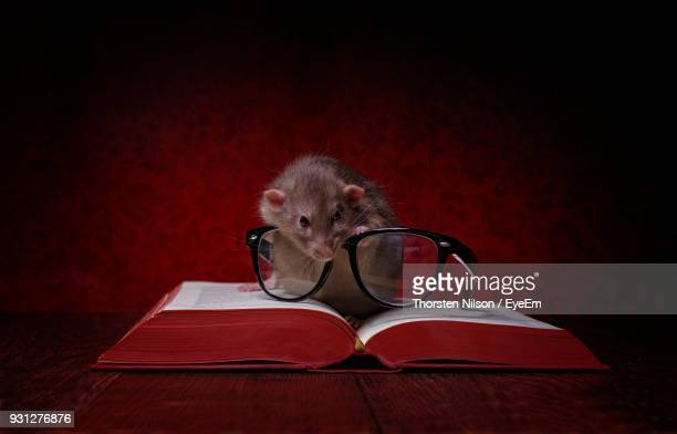 Close-Up Of Rat With Eyeglasses On Book