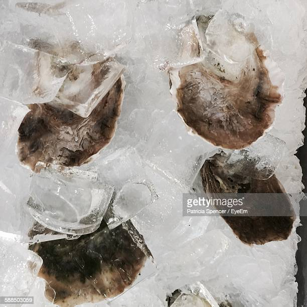 Close-Up Of Raw Oysters In Ice