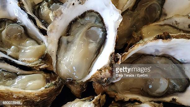 close-up of raw oysters - mie prefecture stock pictures, royalty-free photos & images