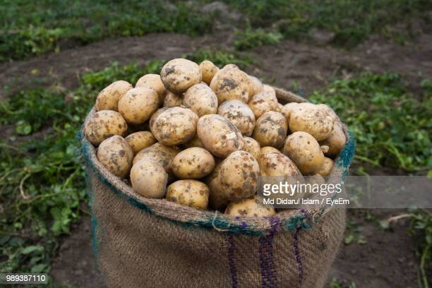 close-up of raw potatoes in sack at farm - potato harvest stock pictures, royalty-free photos & images