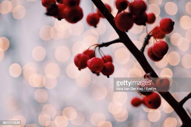 Close-Up Of Red Berries Growing On Branch Against Illuminated Lights