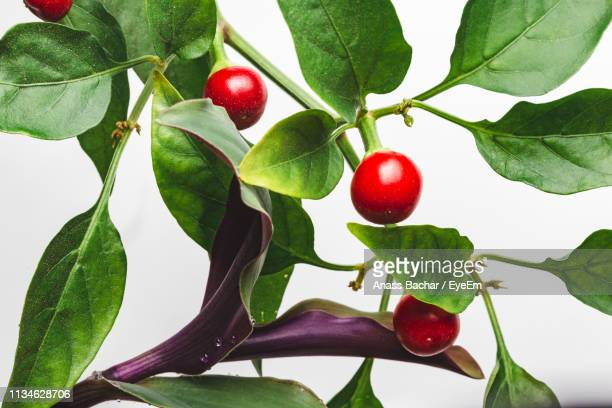 Close-Up Of Red Berries On White Background