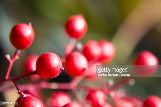 Close-Up Of Red Berries
