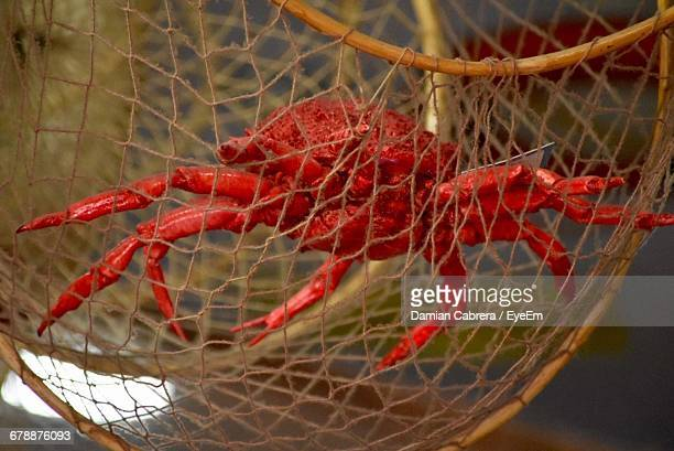 Close-Up Of Red Crab Trapped In Cage