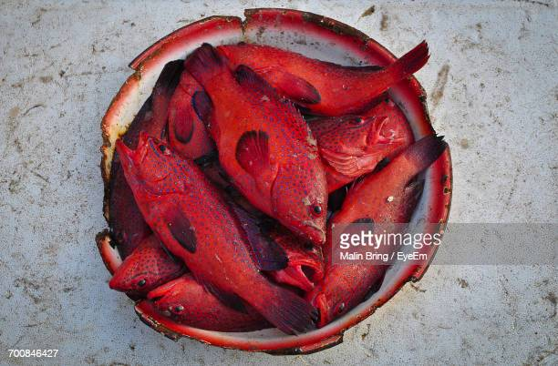 Close-Up Of Red Fish In Bowl