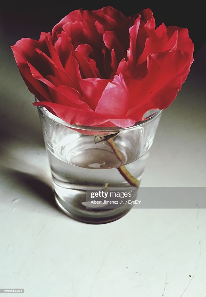 Close-Up Of Red Flower In Drinking Water Glass : Stock Photo