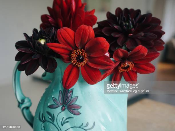 154 Zinnia Bouquet Photos And Premium High Res Pictures Getty Images
