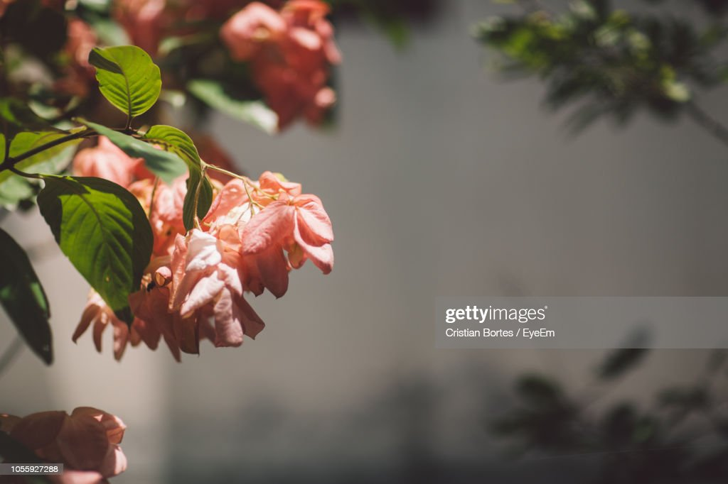 Close-Up Of Red Flowering Plant : Stock Photo