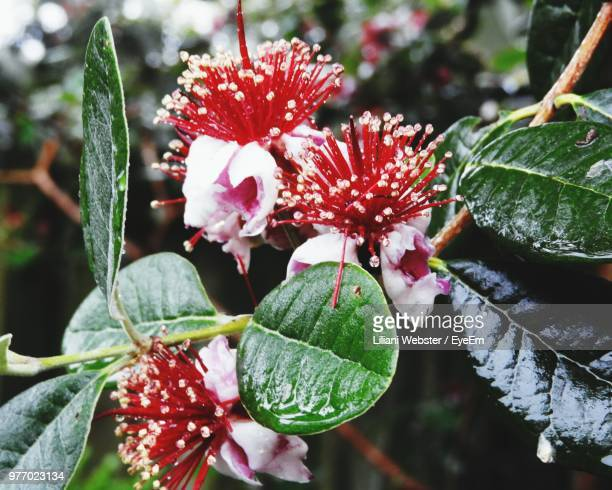 close-up of red flowering plant - the webster stock pictures, royalty-free photos & images