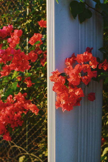 Close-Up Of Red Flowering Plants By Road