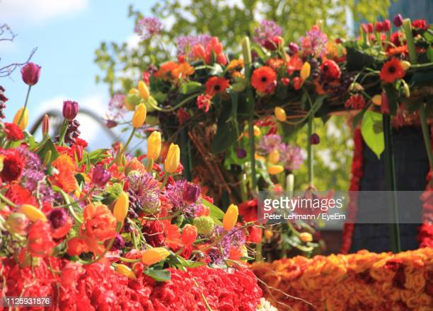 close-up of red flowering plants - haarlem stock photos and pictures