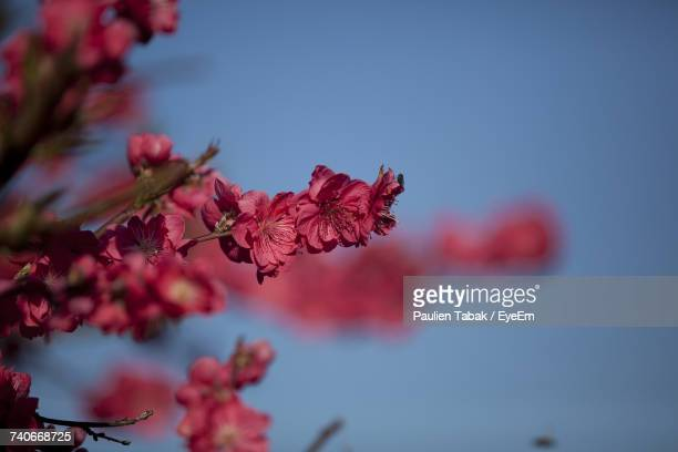 Close-Up Of Red Flowers Blooming Against Sky