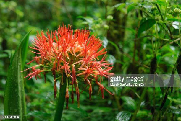 close-up of red flowers blooming outdoors - marek stefunko stock pictures, royalty-free photos & images