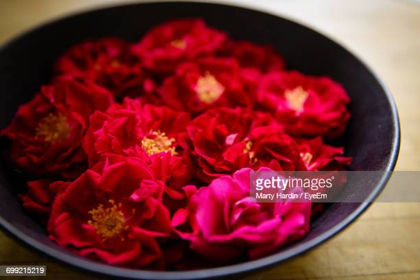 close-up of red flowers - marty hardin stock pictures, royalty-free photos & images