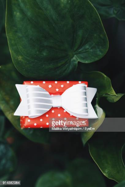 Close-Up Of Red Gift Box On Plants
