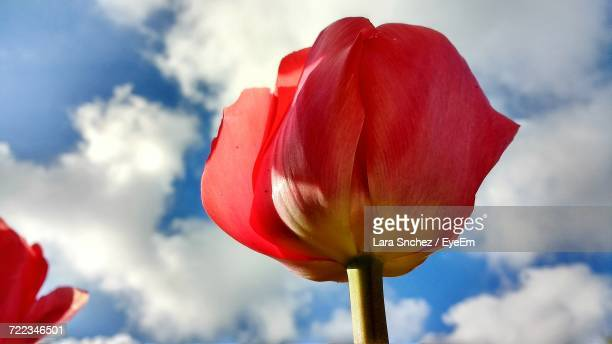 Close-Up Of Red Poppy Against Sky