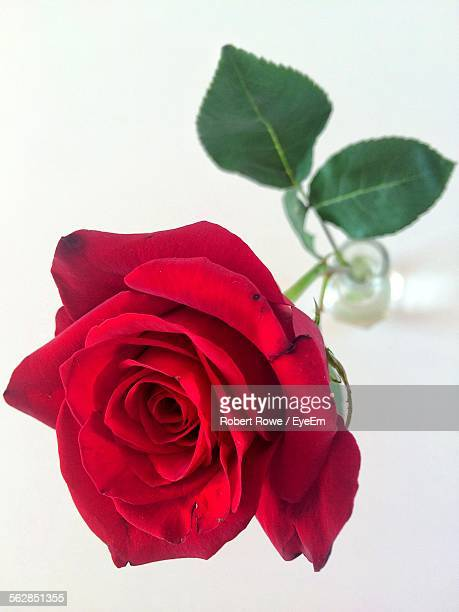 Close-Up Of Red Rode In Vase Over White Background