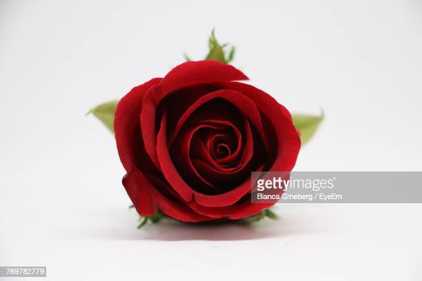 close-up of red rose against white background - red roses stock photos and pictures