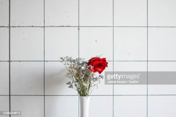 close-up of red rose against white wall - jelena ivkovic stock pictures, royalty-free photos & images
