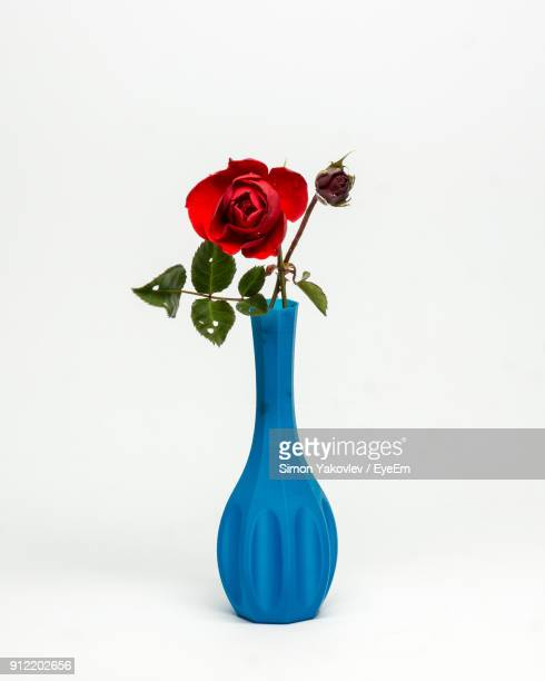 close-up of red rose in blue vase against white background - 花瓶 ストックフォトと画像