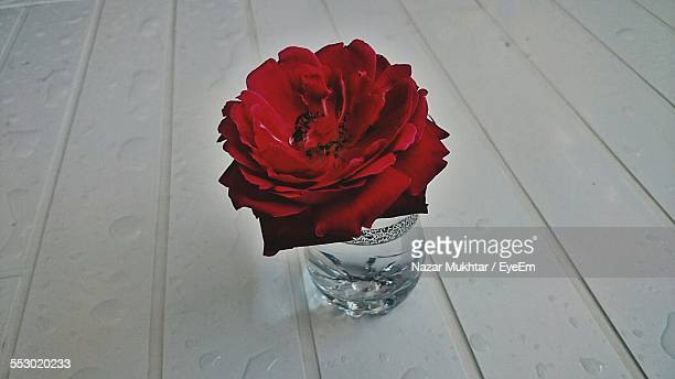Close-Up Of Red Rose In Vase