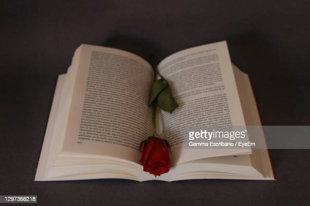 close-up of red rose on book - roses catalonia stock pictures, royalty-free photos & images