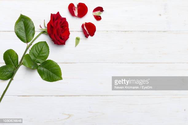 close-up of red rose on table - rose petals stock pictures, royalty-free photos & images