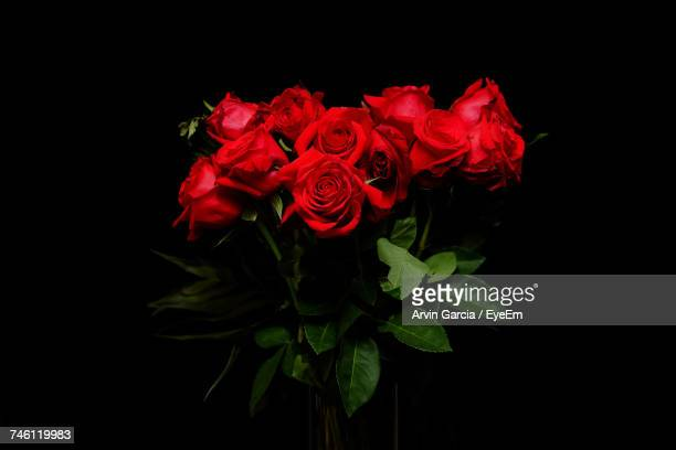 close-up of red rose - black rose stock photos and pictures