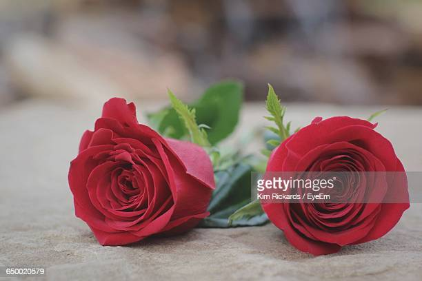 close-up of red roses on table - kim rose stock-fotos und bilder